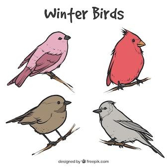Mehrere skizzen der schönen vögel