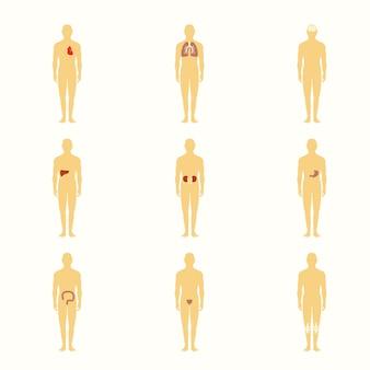 Menschliche figuren mit inneren organen