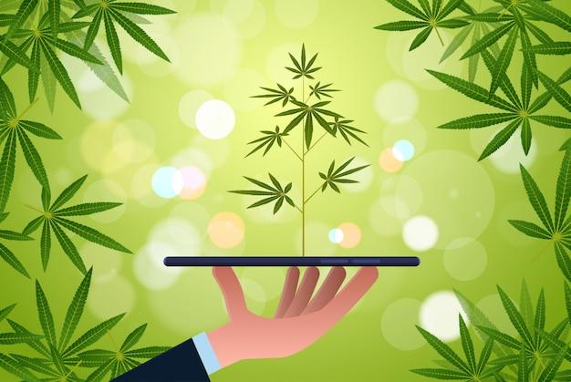 Menschliche hand hält smartphone mit cannabis-pflanzenfarm marihuana plantage mobile app konzept horizontale ebene