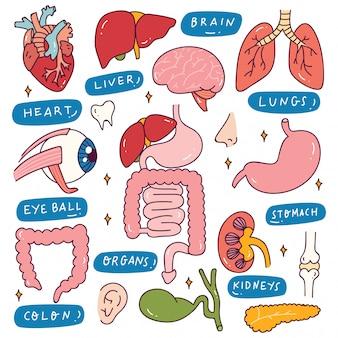 Menschliche innere organe im doodle-stil