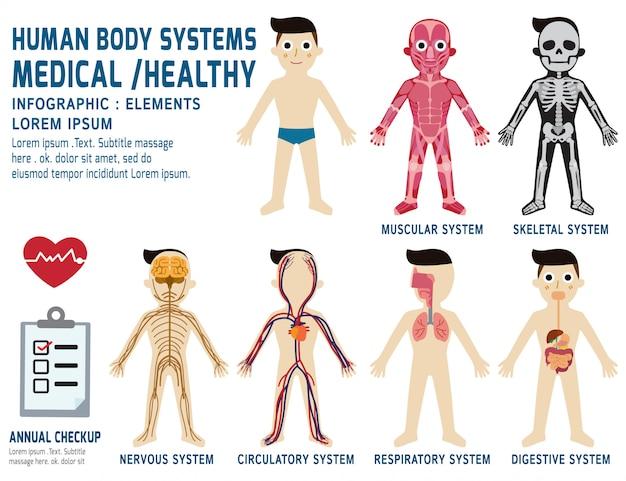 Menschliche körpersysteme jährliche überprüfung anatomie körper organ grafik