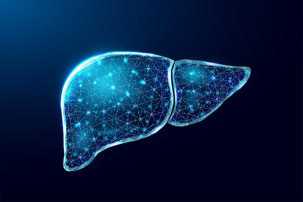Menschliche leber. wireframe-low-poly-stil. konzept für die medizinische behandlung der hepatitis. abstrakte moderne illustration des vektors 3d auf dunkelblauem hintergrund.