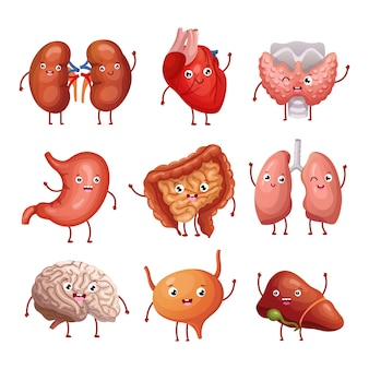 Menschliche organe der netten karikatur. magen, lunge und nieren, gehirn und herz, leber. lustige vektoranatomiezeichen der inneren organe