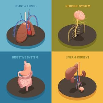 Menschliche organe isometrische zusammensetzung