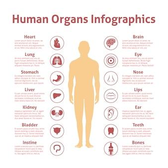 Menschliche organe symbole mit männlichen figur infografiken gesetzt vektor-illustration
