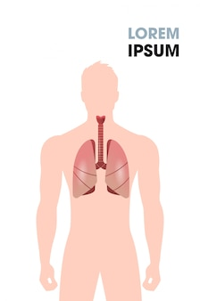 Menschliche speiseröhre luftröhre lunge innere organe atmungssystem medizinisches poster porträt flacher vertikaler kopierraum