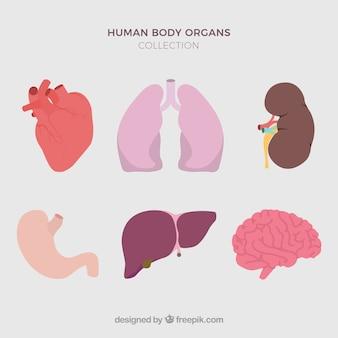 Menschlichen organen