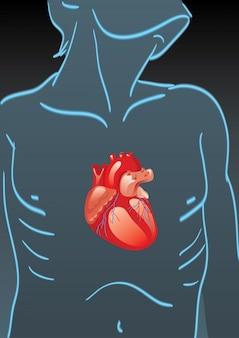 Menschlicher körper mit inneren organen