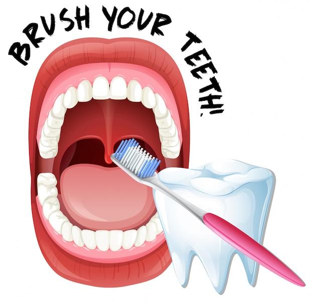 Menschlicher mund und zahnbürste