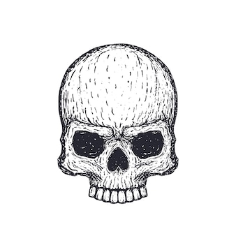 Menschlicher schädel auf weißer, handgezeichneter vektorillustration
