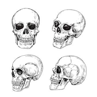 Menschlicher schädel. hand gezeichnete schädel. skizzenweinlesetod-tätowierungsdesign lokalisiert
