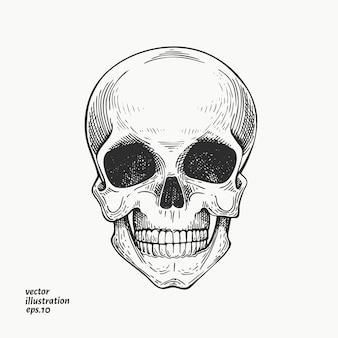 Menschlicher schädel illustration. hand gezeichnete skelettillustration.