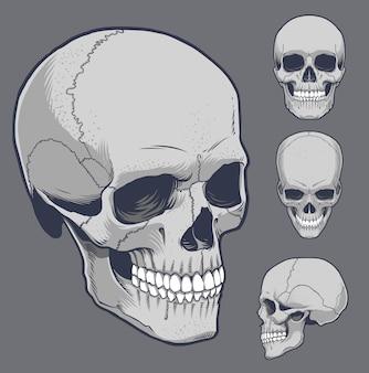 Menschlicher schädel in verschiedenen winkeln