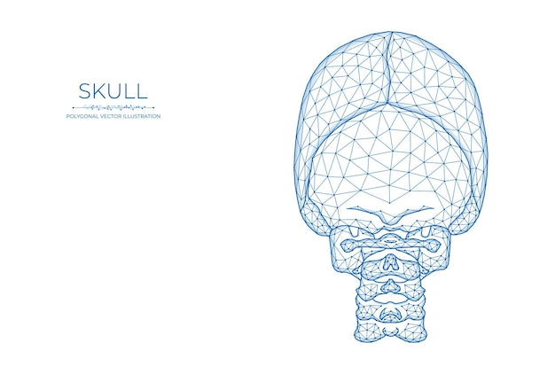 Menschlicher schädel low-poly-kunst. polygonale vektorillustration einer schädelrückansicht.