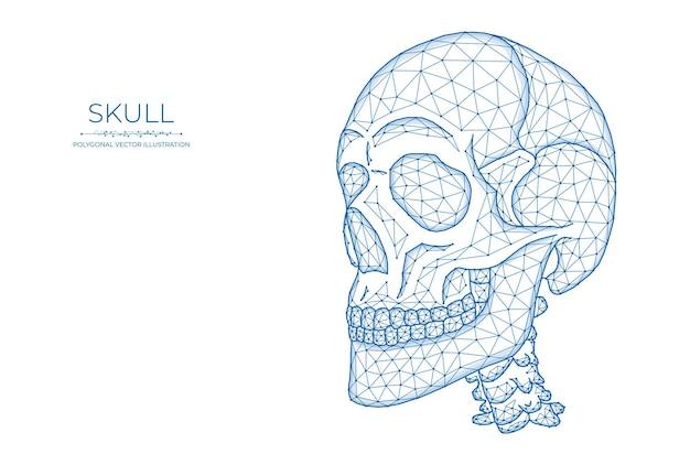 Menschlicher schädel low-poly-kunst. polygonaler schädel auf weißem hintergrund.