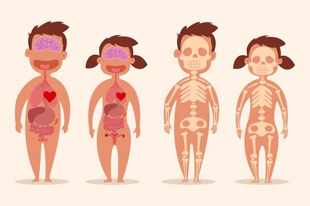 Menschliches inneres organ. männliche und weibliche skelette. körperanatomie eines mannes und einer frau. vektor-cartoon-illustration isoliert