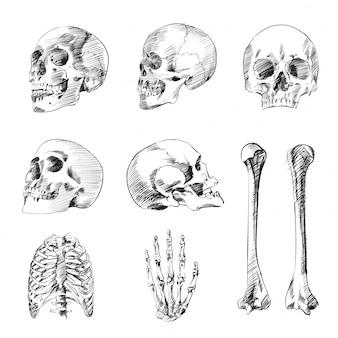 Menschliches schwarzweiss-skelettset