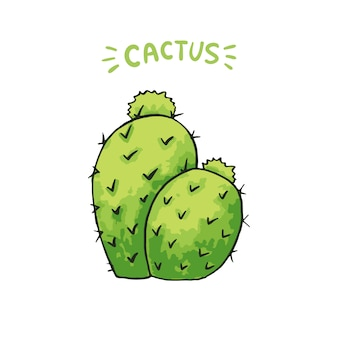 Mexikanischer kaktus