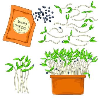 Microgreens wachsen in einem topf. gesundes, biologisches, gesundes essen. samen für den anbau von microgreens