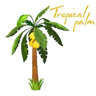 Milde bananenfrucht auf palme, exotische süße frucht.