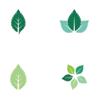 Minzblatt frischer natur-logo-vektor Premium Vektoren