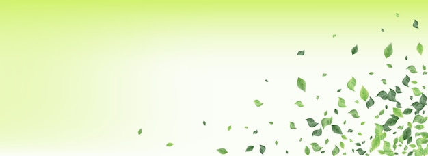 Minze grün wind panorama grün hintergrund pflanze