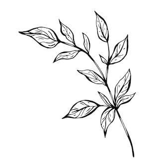 Mit blättern verzweigen. handgezeichnete abbildung. monochrome schwarz-weiß-tintenskizze. strichzeichnungen. malvorlagen.