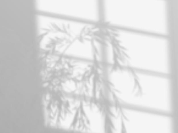 Moderne schattenüberlagerung, tolles design für jeden zweck. verschwommener weicher schatten vom fenster und zweige von pflanzen außerhalb des fensters. natürliche schatten auf transparentem hintergrund isoliert.