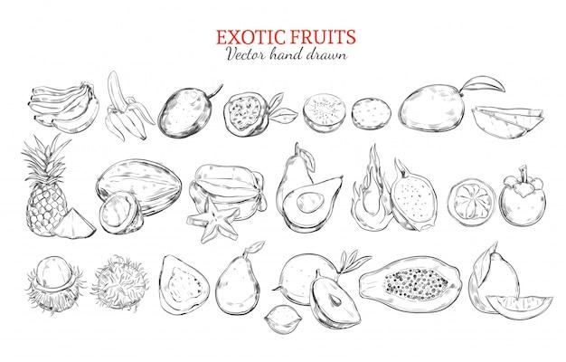 Monochrome exotische und tropische frucht-sammlung