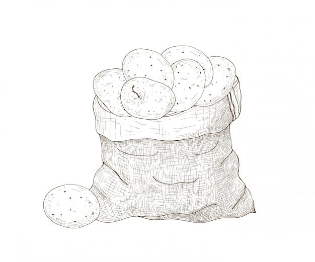 Monochrome zeichnung von kartoffelknollen im leinensack. geerntete knollenfutterpflanzen. natürliches bio-gemüse lokalisiert auf weißem hintergrund. hand gezeichnete illustration im eleganten weinlesestil.