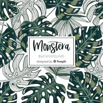 Monstera geht