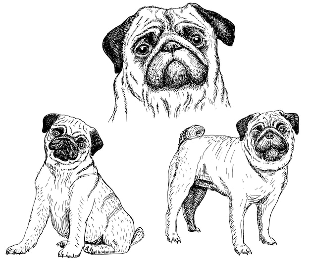 Mops dogsketch icon-set