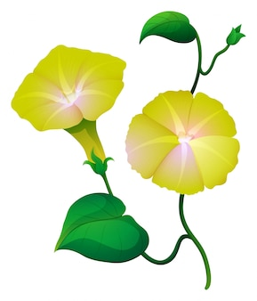Morning glory blume in gelber farbe Kostenlosen Vektoren