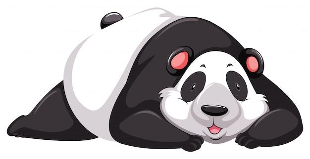 Müde pandabär