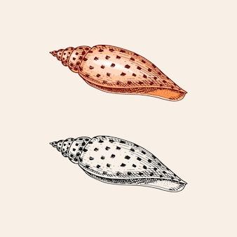 Muschel oder molluske verschiedene formen graviert hand gezeichnet