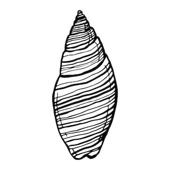 Muschel, ozean natur unterwasservektor. handgezeichneter marinedruck auf weißem hintergrund