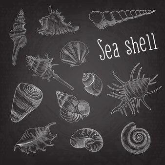 Muscheln hand gezeichnet aquatic set