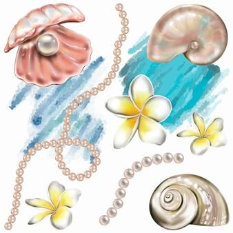 Muscheln, perlen und plumeriablumen. handmalerei-abbildung. vektor isolierte elemente.