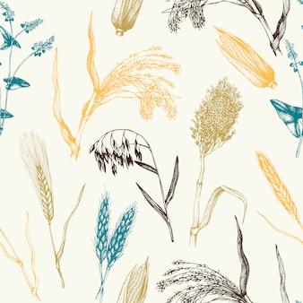 Muster mit handgezeichneten getreidekulturen. botanischer hintergrund.