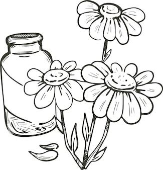 Mutterkraut oder kamille oder kamille gänseblümchenartige pflanze. tanacetum parthenium vektorillustration