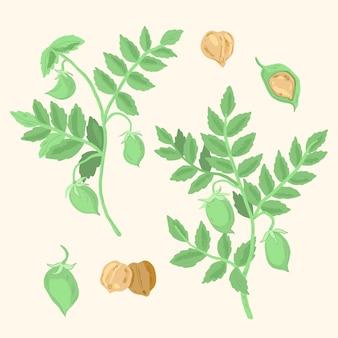 Nährende kichererbsenbohnen und pflanzenillustration