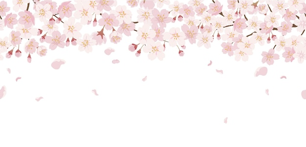 Nahtlose blumen mit kirschblüten in voller blüte auf einem weiß isoliert.