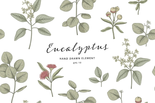 Nahtlose eukalyptuspflanze handgezeichnete botanische illustration