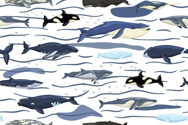 Nahtlose musterwale auf weißem hintergrund mit wellen und fleck. vorlage von zeichentrickfiguren des ozeans im skandinavischen stil für kinder.