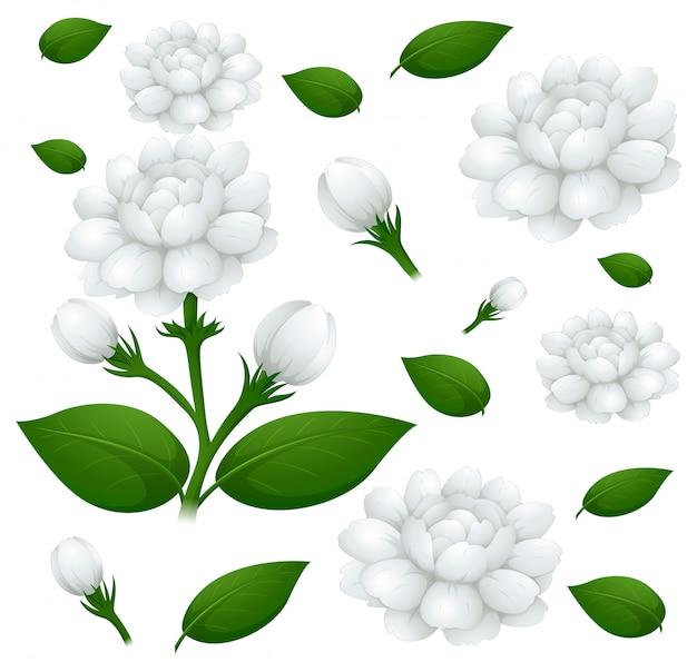 Nahtloser hintergrund mit jasminblumen