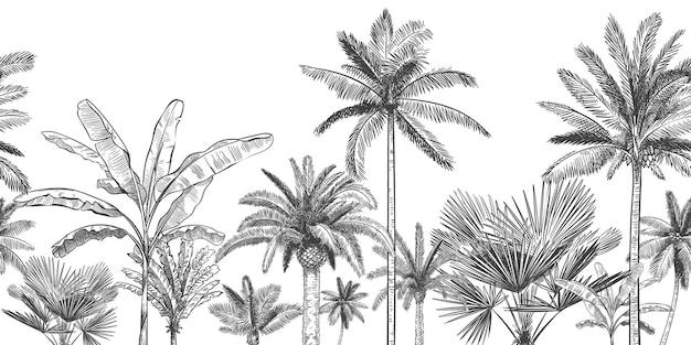 Nahtloser horizontaler tropischer hintergrund. hand gezeichnete palmen, skizzieren exotische tropische dschungelblätter und paradiespalmen-tapetenillustration.