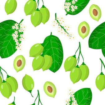 Nahtloses muster der vektorkarikatur mit exotischen früchten, blumen und blättern der terminalia oder kakadupflaume auf weißem hintergrund