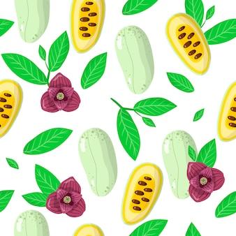 Nahtloses muster der vektorkarikatur mit exotischen früchten, blumen und blättern von asimina triloba oder papaw