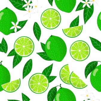 Nahtloses muster der vektorkarikatur mit exotischen früchten, blumen und blättern von citrus aurantiifolia oder key lime