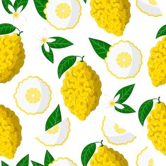 Nahtloses muster der vektorkarikatur mit exotischen früchten, blumen und blättern von citrus medica oder citron auf weißem hintergrund